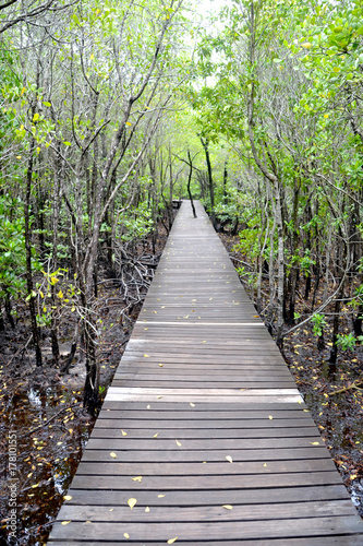 Papiers peints Route dans la forêt Wood floor with Bridge in the forest in mangrove forest.