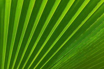 tropical palm leaves background