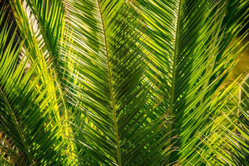 tropical palm leaves background with lush foliage