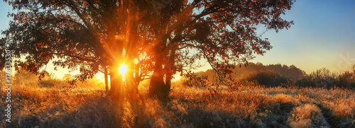 Foto op Canvas Herfst Panoramic autumn landscape. Bright sunrays through branch tree on meadow. Scenery autumn nature for banner. Vivid sunbeams through large tree. Colorful nature on sunrise.