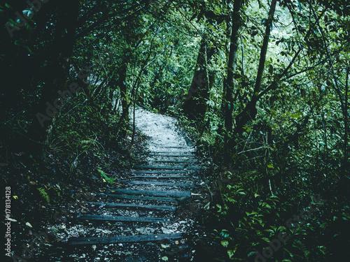 Papiers peints Rivière de la forêt mountain path stairs