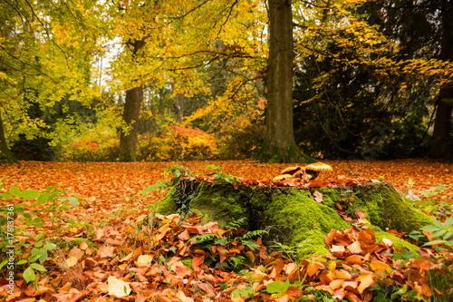 Papiers peints Automne Autumn in Czech park