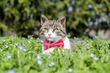 cat in grass wearing red bowtie