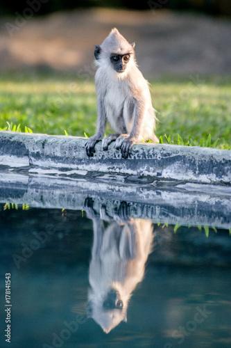 Aluminium Aap monkeys in Sri Lanka