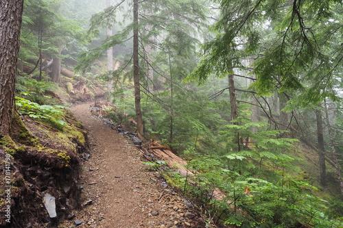 Papiers peints Route dans la forêt OLYMPUS DIGITAL CAMERA