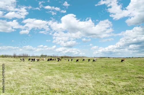 Foto op Plexiglas Pistache cow on pasture landscape