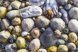variety of seashells on the ocean coast - 178143513