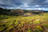 paysage des Cévennes avec des collines couvertes de bruyère
