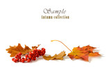 Autumn leaves with rowan bunch isolated on white background. - 178152120