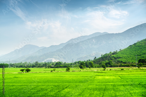 Bright green rice fields. Beautiful summer landscape