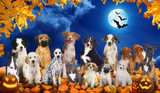 Big group of dogs sitting on pumpkins