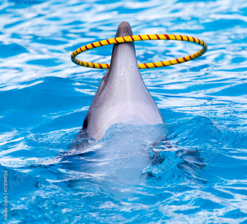 Fotobehang Dolfijn dolphin spinning hoop in the pool