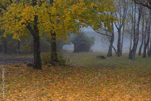 Fotobehang Herfst Morning in fall