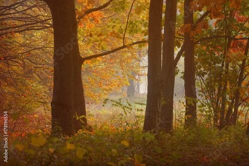 Fotobehang Berkenbos Autumn
