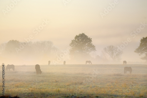 dawn, sunrise, Umzimkulu River valley, dusk, agriculture, landscape, countryside, moody, romance, horses Poster