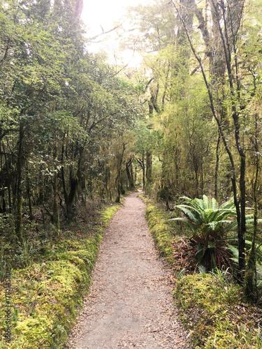 Papiers peints Route dans la forêt Forest of Milford Track, New Zealand