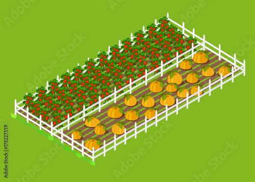 Fotobehang Boerderij Red Bell Pepper and Pumpkins Beds Planted at Farm