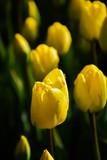 Flower - 178230515
