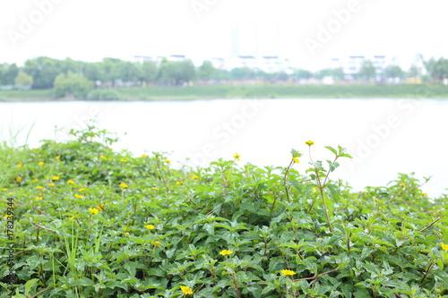 エンソー湖 ベトナム ハノイ Poster