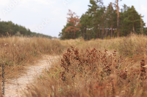 Staande foto Herfst Fall pine forest at cloudy day