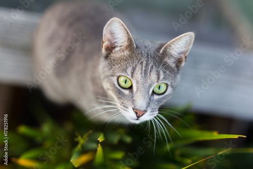 Katze Poster