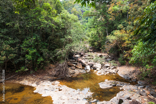 Stream in the tropical jungles Poster