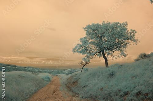 Papiers peints Beige Infrared landscape and details