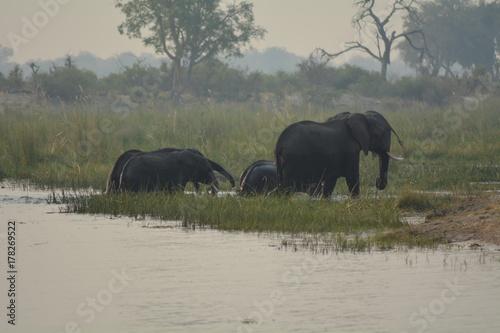 Elefanten Herde Poster