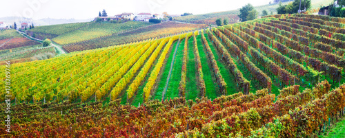 Fotobehang Freesurf Pictorial countryside and beautiful vineyards of Piemonte in autumn colors. Italy