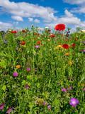 Bee meadow