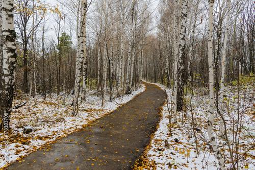 Papiers peints Bosquet de bouleaux Дорожка в лесу