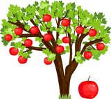 Apple tree with green leaves and ripe red fruits on white background