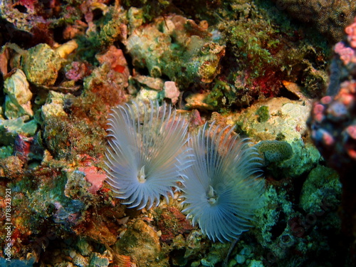 Tube worms Poster