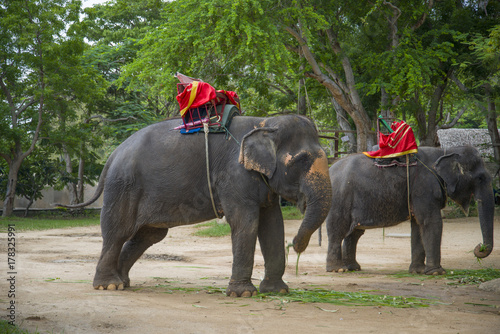 Elephants waiting for tourists. Poster