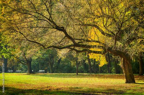 Papiers peints Automne autumn in the urban park, benches, trees