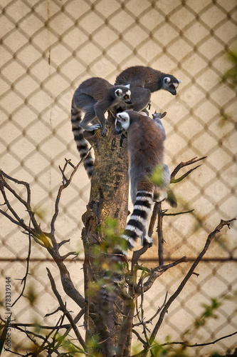 a monkey in prison Poster