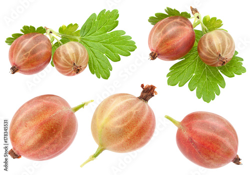 Gooseberry fruit on white collection плакат