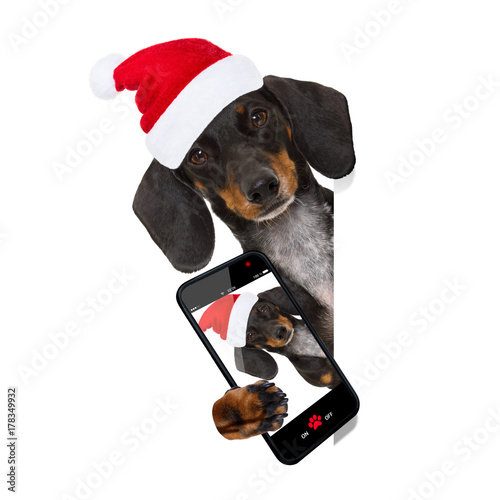 Fotobehang Crazy dog santa claus dog on christmas holidays