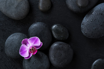 Orchid on black spa stones