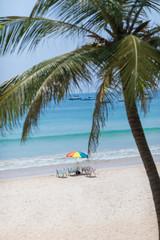 Palm on a tropic white beach
