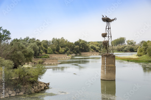Foto op Plexiglas Rio de Janeiro Storks on their nests at a column in Ebro river in Alcalá de Ebro, province of Zaragoza, Spain