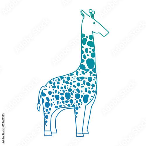 Poster wild giraffe isolated icon
