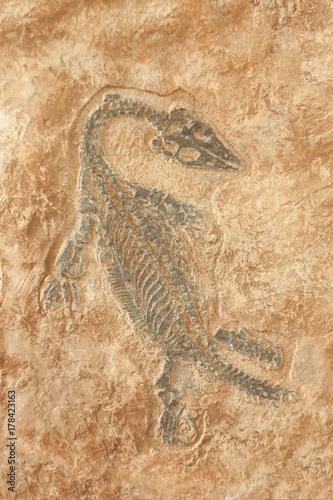 Plagát Fossil of prehistoric lizard skeleton on the rock