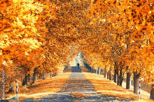 In de dag Oranje eclat Bäume mit bunten Blättern - Herbstallee