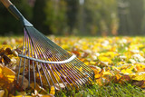 Raking fallen leaves in the garden , detail of rake in autumn season.  - 178430199