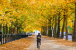 Autumn scene, back view of a cyclist riding through the constitution hill road lined with trees in Green Park of London