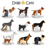 Set of dogs and cats different breeds color flat icons set - 178460700