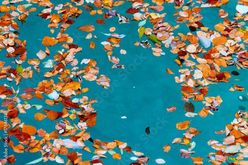 Papiers peints Automne colorful leaves festival
