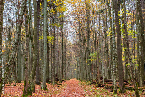 Fotobehang Weg in bos Białowieża-Urwald im Herbst