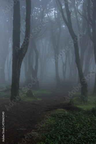 Fotobehang Betoverde Bos Mysterious dark old forest with fog in the Sintra mountains in Portugal